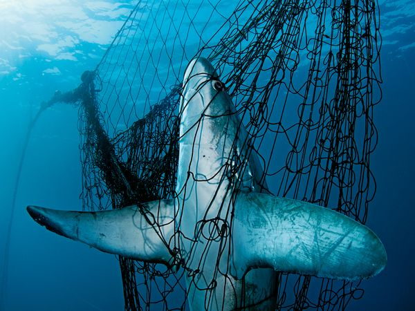 FOTO: BRIAN SKERRY/NATIONAL GEOGRAPHIC